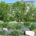 2012 The Clinton Street Rain Garden