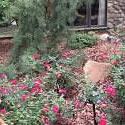 2013 HGC Country Estate garden on tour
